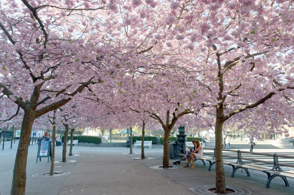 Jarní Stockholm (březen-květen 2019)